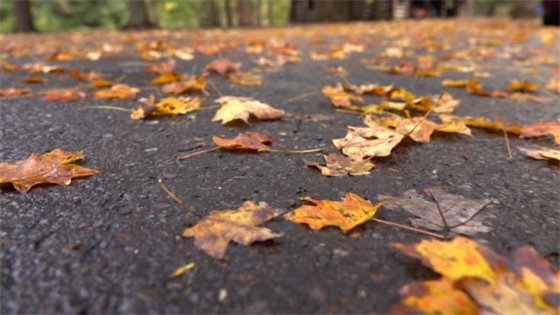 Leaves on Road Picture