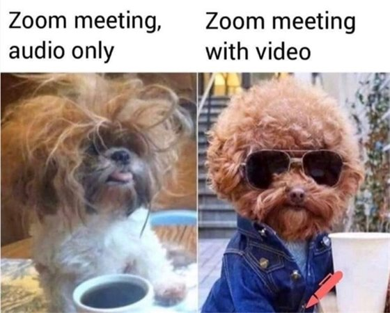 Dogs on Zoom Funny Picture