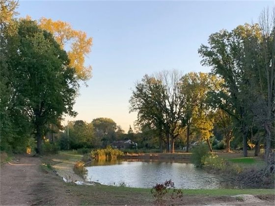 Pond at Normandy Oaks Park Picture