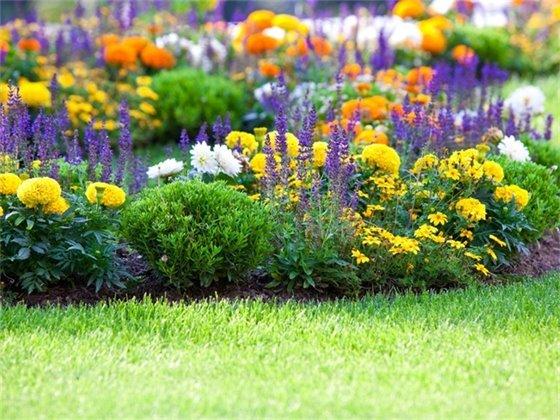 Flower Garden Picture
