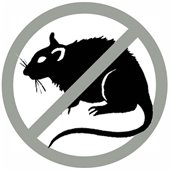 Oh...Rats