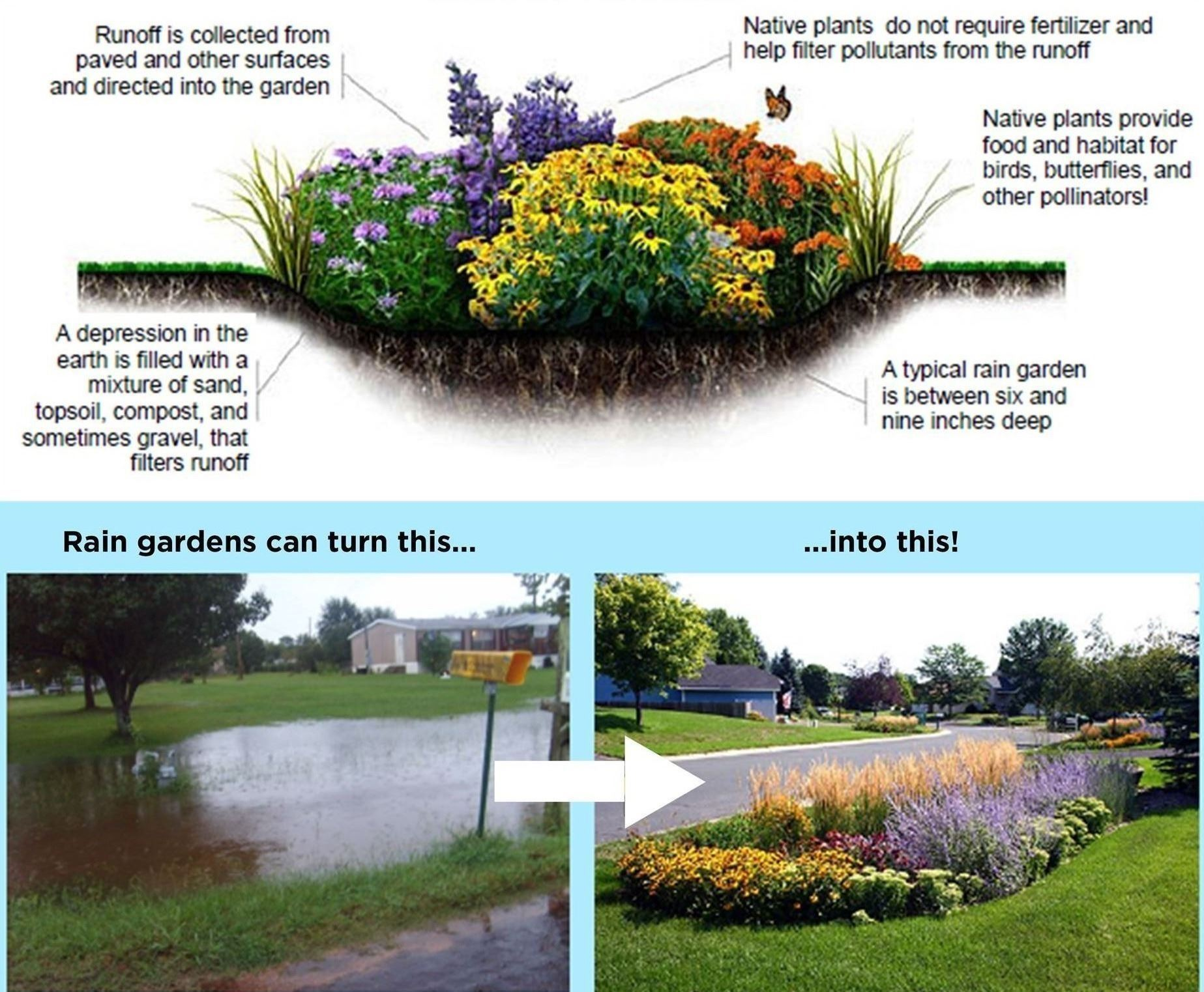 Rain Garden Program | Royal Oak, MI on rain illustration, rain barrels, bioswale design, rain gardens 101, rain art drawings, rain gutter downspout design, rain roses, gasification design, rain harvesting system design, french drain design, dry well design, rain water design, rain construction,
